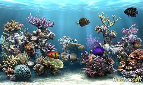 themes for windows 7 aquarium fish tank games screensaver windows screensavers free 3d