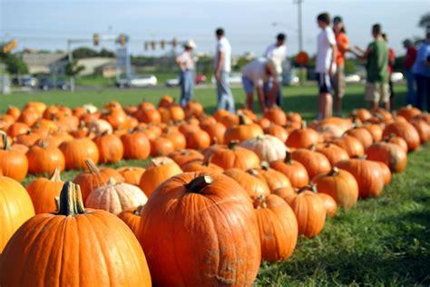 pumpkin patch - Pumpkin Patches