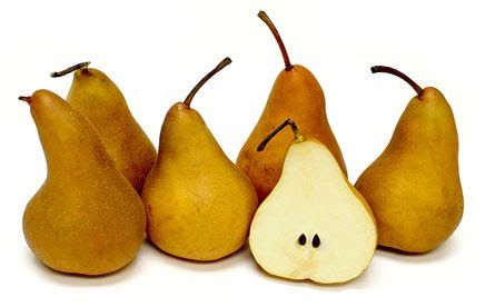 bosc pears information recipes  facts