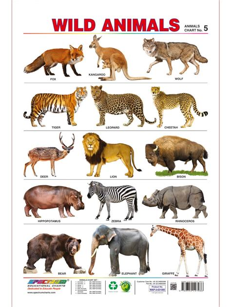 7 Letter Word Animal Names Spectrum Pre School Learning Poster Educational