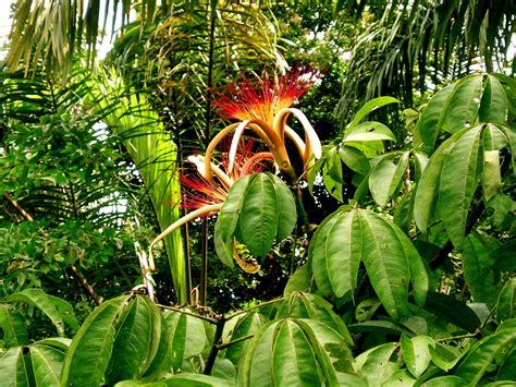 garden planet february