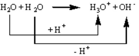 proton h acceptor bronsted acids and bases