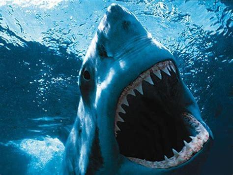 Edc Putih smart ebook hiu putih great white shark