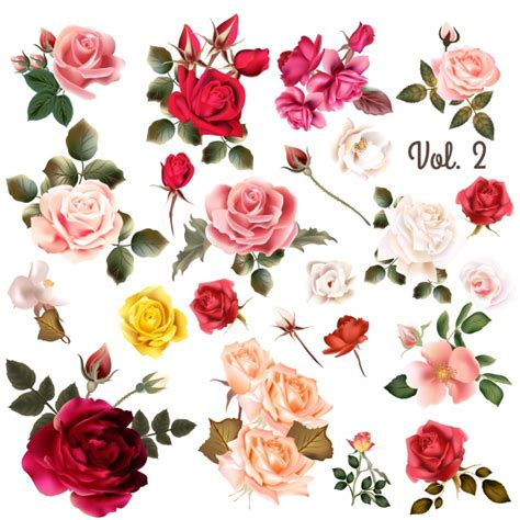 Gucci Bunga Premium coloured roses collection vector premium