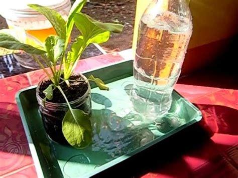 menanam lemon hidroponik tips dan triks cara menyemai benih doovi