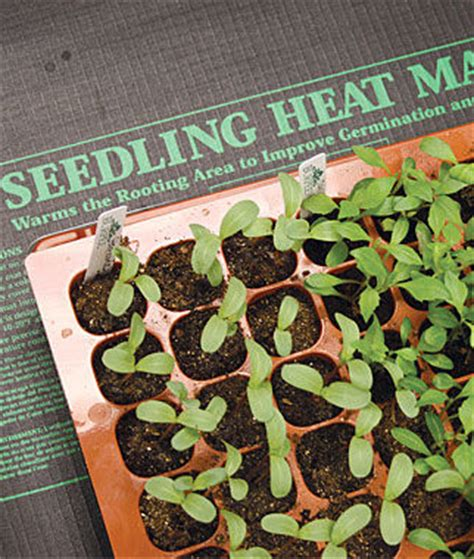 seedlings heat mat seed starting supplies and garden