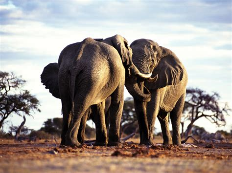 wild animals names hd animals wallpapers