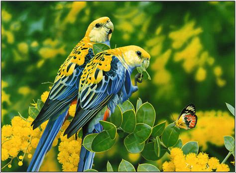 wallpaper birds 15 beautiful birds hd wallpapers 2013 beautiful