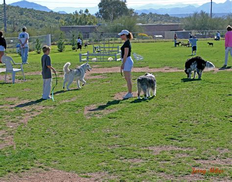 park for dogs california vet association park safety tips worms germs