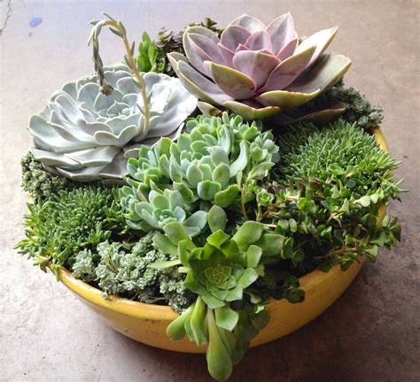 succulent planter fall entertaining succulent custom planters sloat