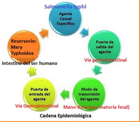 cadena epidemiologica lepra higiene y sanidad mar 237 a tifoidea typhoid mary cadena