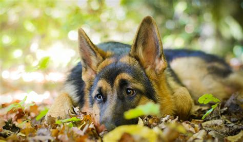 puppy wallpapers free 4k wallpapers high quality free