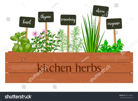 kitchen herbs wooden crate farm fresh cooking herbs stock vector