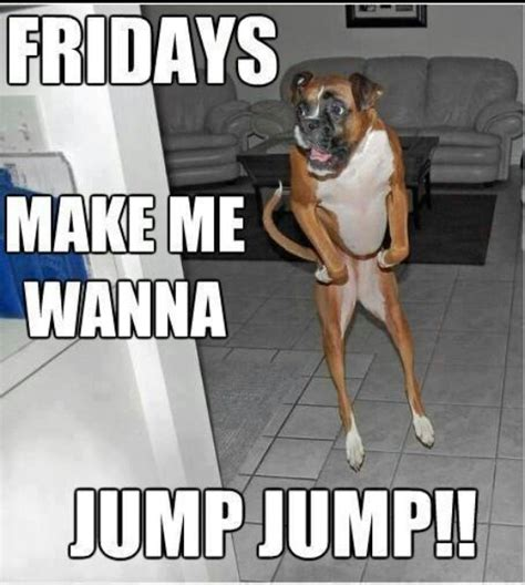 Funny Boxer Dog Memes - friday boxer dog poochies pinterest patrick o