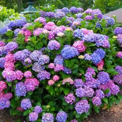 northeast gardening what shrubs can do for your garden