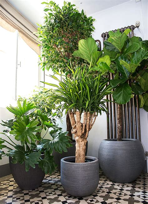 Plantes D Interieur Decoration deco plante interieur