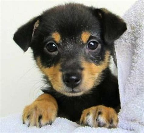 adoption center for puppies spca puppies for adoption breeds picture