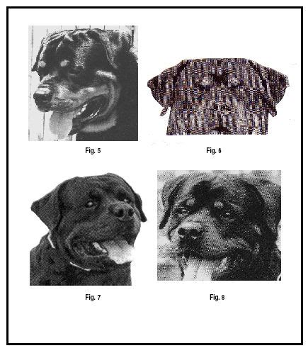 what types of rottweilers are there conformation