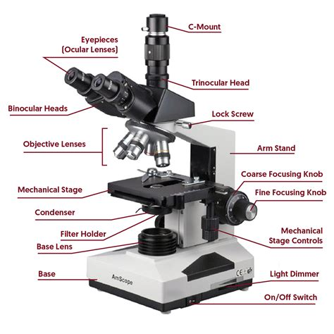 what is a compound light microscope what is a compound light microscope 28 images