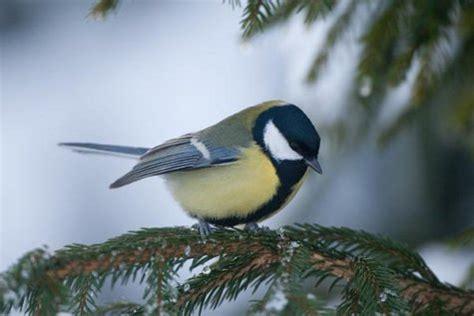 uccello simile al gabbiano estonia varie in pagina 16 birdcam it