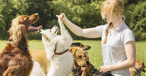 animal trainer  australia careers