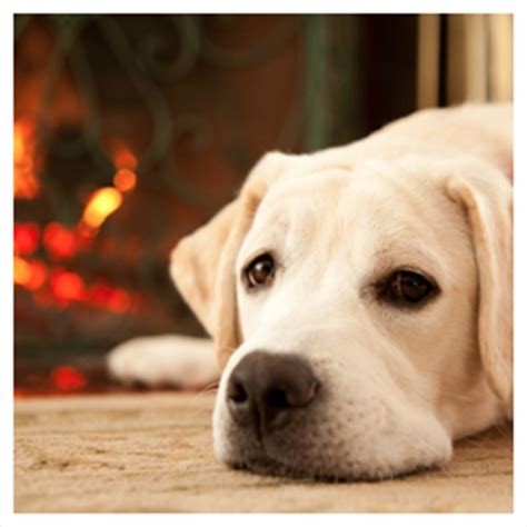 pet urine odor removal guaranteed rug cleaning