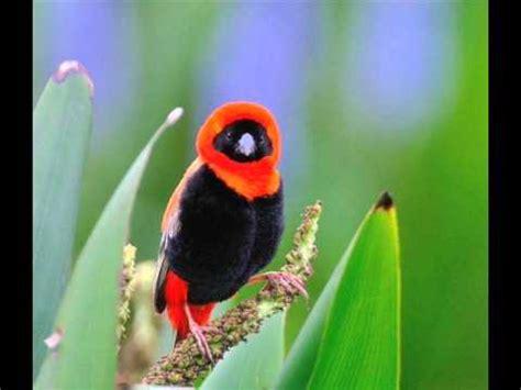 las aves exticas mi 8408127950 aves exoticas del grupo maravillas de mi mundo youtube