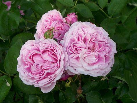 fiori giardino perenni fiori da giardino perenni foto 8 13 tempo libero pourfemme