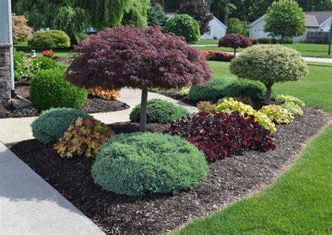 landscaping ideas   mikes backyard nursery