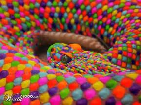 rainbow colored snake color blind worth1000 contests