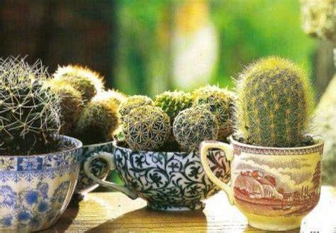 come curare le piante da appartamento piante grasse da appartamento idee green