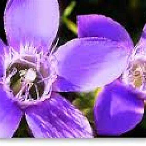 fiori di bach torino fiori di bach quando la realt 224 della mente ti condiziona