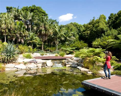 Mount Annan Botanical Gardens Cafe Sydney Destination Drives Are You Selling