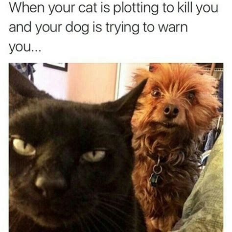 Fuck You Cat Meme - 17 best images about funny wtf on pinterest funny