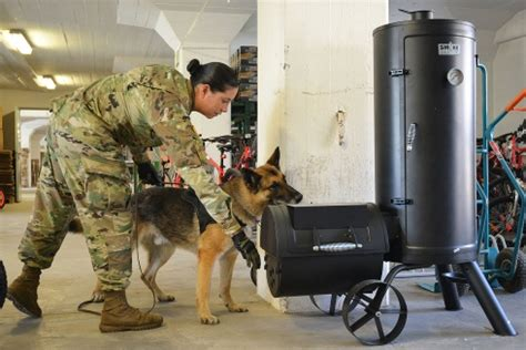 military dogs are becoming an increasingly precious