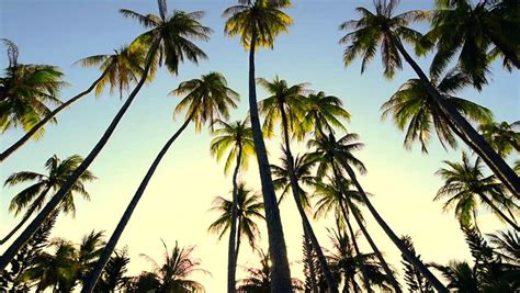 palm trees background palm tree backgrounds pink palm tree background