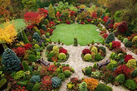 autumn garden beautiful acers best viewed in original
