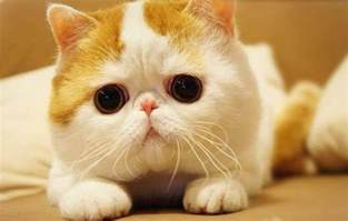 cutest cat photos you ll ever see