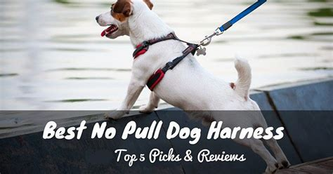 best no pull harness best no pull harness top 5 picks reviews