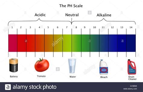 draw scale diagram diagram of the ph scale with exles of acidic neutral