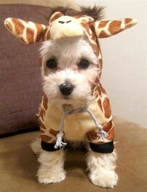 puppies in costumes 25 best ideas about costumes on costumes black