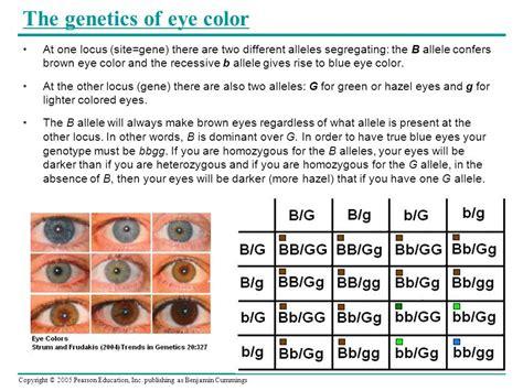 punnett square for eye color punnett square eye color worksheet color of
