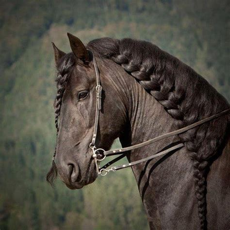 hairstyles for horses image gallery horse hair styles