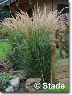 Japanischer Garten Pflanzen 352 by Miscanthus Sinensis Gro 223 E Font 228 Ne Chinaschilf Meine