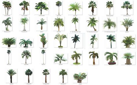imagenes sin fondo autocad 193 rboles con fondo transparente png arq recursos