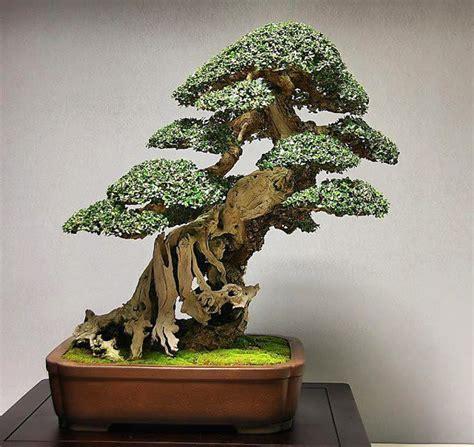 bonsai haus 40 besten bonsai house bilder auf