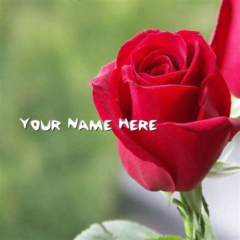 got your name written here in a rose tattoo get your name in beautiful style on picture you