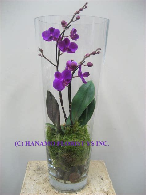 Orchid In Glass Vase by Orch014 Orchid In The Glass Vase Dreams Do Come