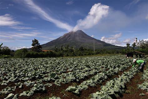 mengetahui dampak abu vulkanik  tanaman