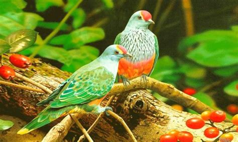 the world of birds beautiful colorful birds hd wallpaper